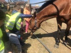U koníka Karlíka
